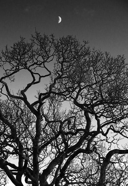 Moon treetop