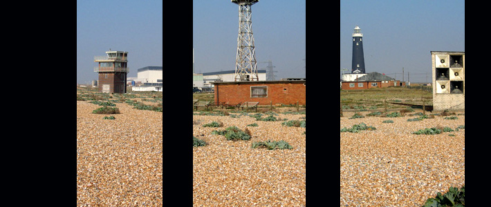 Dungeness sections