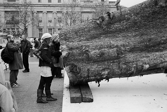 Tree smeller