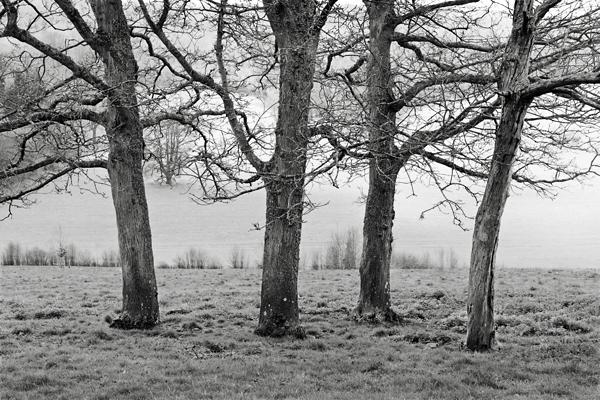 TreesP_L